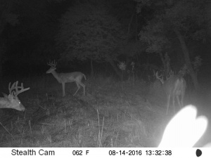 Beamer's Trail Cam Photo