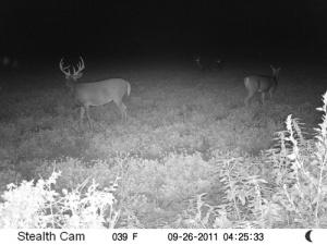 Beamer's Trail Cam Photo