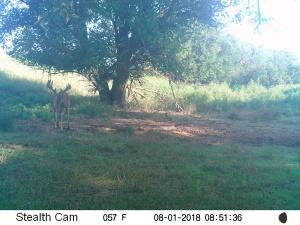 Beamer's 2018 Trail Cam Pics